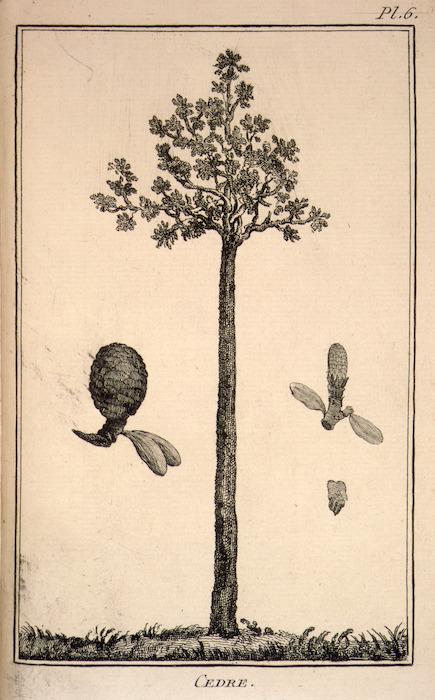 Artist unknown :Cedre. Pl[ate] 6. [1783].