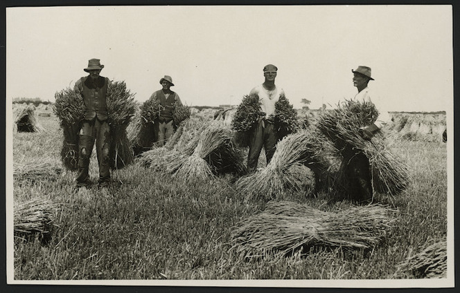 Green and Hahn :Photograph of men with wheat sheaves, Lincoln, Canterbury