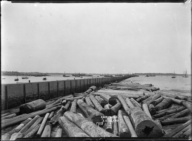 Auckland Harbour waterfront, with kauri logs