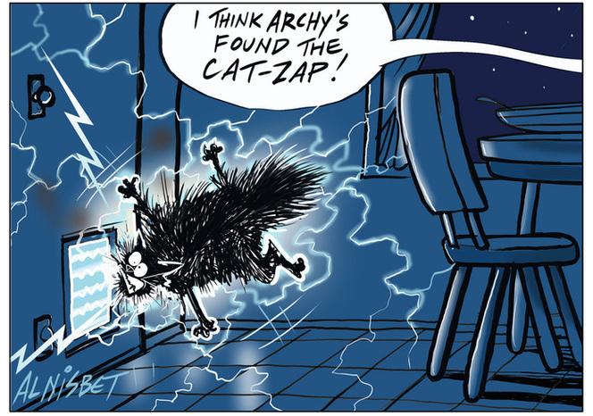 Cat zap