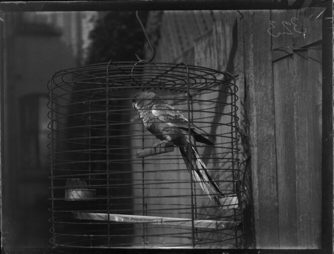 A parrot in a cage