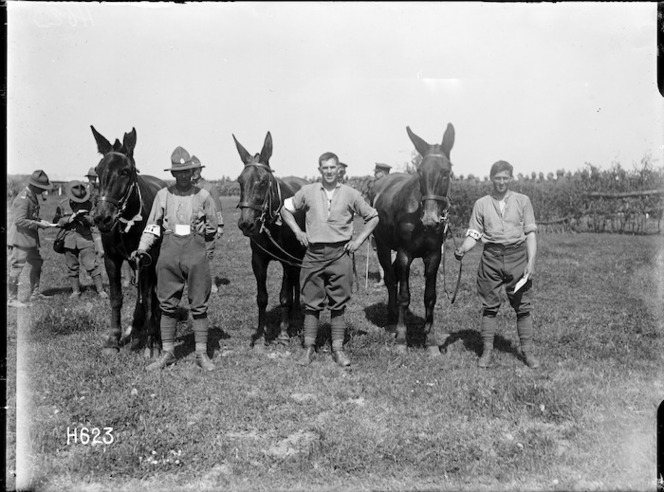 The winners of the mules' steeplechase at the New Zealand Infantry Brigade horse show, France