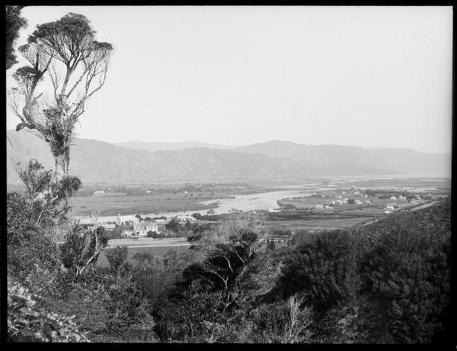 Overlooking Lower Hutt, through trees