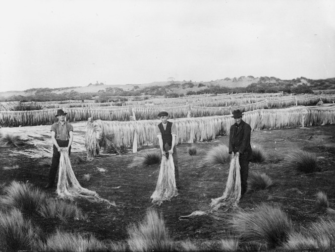 Men in a paddock with rows of drying flax fibre, (Invercargill?) - Photograph taken by Will Cameron