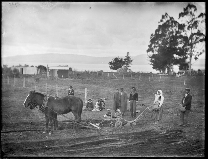 Maori woman ploughing a field - Photograph taken by William Henry Thomas Partington