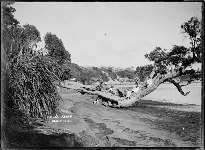 Children on a tree at Hall's Beach, Northcote, Auckland