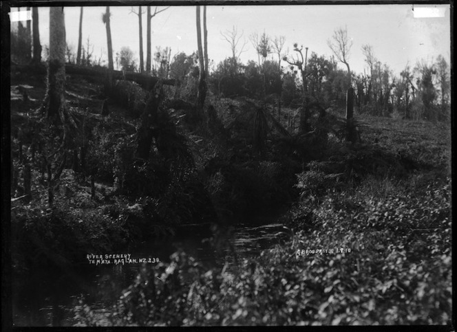 River scenery, Te Mata, Raglan County, 1910 - Photograph taken by Gilmour Brothers