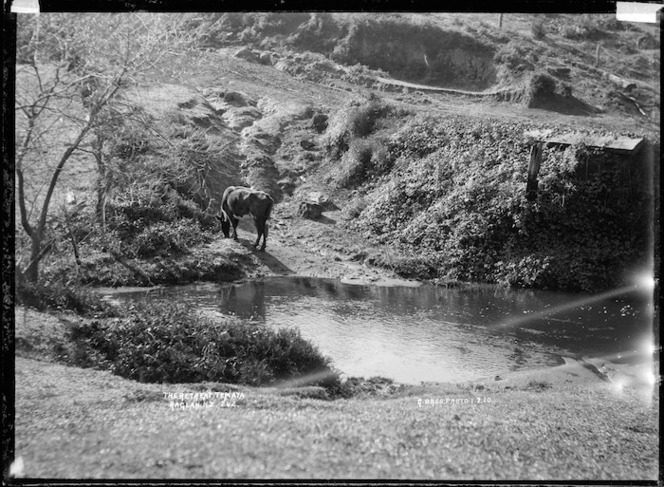 """""""The retreat"""", Te Mata, 1910 - Photograph taken by Gilmour Brothers"""