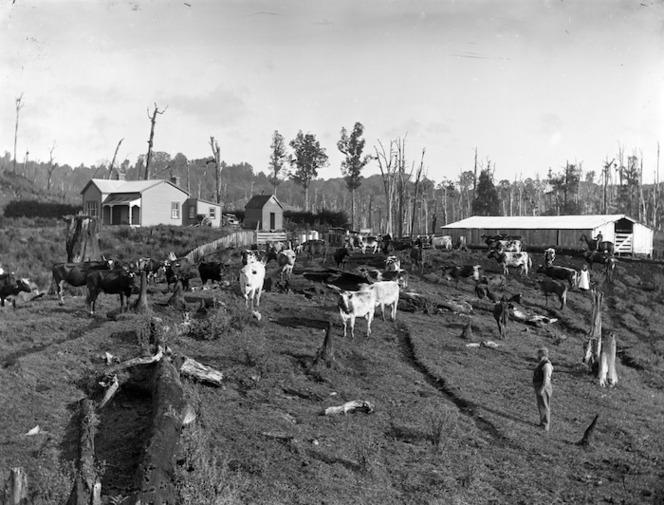 A Taranaki dairy farm