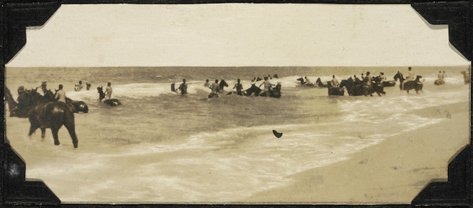 Troops of the ANZAC Mounted Division and their horses, swimming.