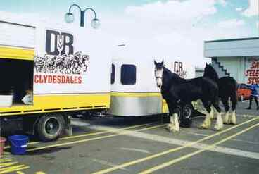 Image: DB Clydesdales