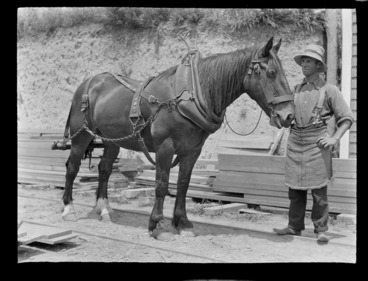 Image: Portrait of an unidentified man and a Clydesdale horse with harness on rail lines at the Kakahi Sawmill, Kakahi District, Manawatu-Whanganui Region