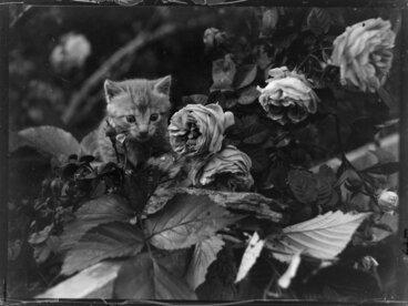 Image: Rural scene with kitten in the garden