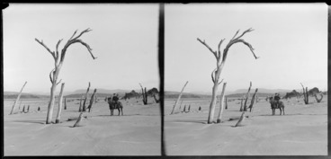 Image: Unidentified man on horse on beach with dead trees, Catlins area, Clutha District, Otago Region