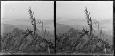 Image: View from Mount Cargill, Dunedin, featuring an unidentified man standing on a rocky outcrop amongst dead trees