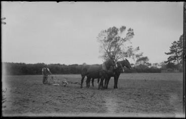 Image: Man ploughing a field with three horses, unknown location