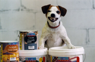 Image: Jack Russell terrier and jellybeans at a photo shoot for paint.