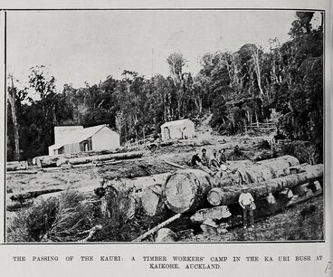 Image: THE PASSING OF THE KAURI: A TIMBER WORKERS' CAMP IN THE KAURI BUSH AT KAIKOHE AUCKLAND.