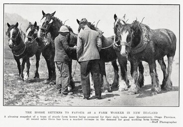 Image: THE HORSE RETURNS TO FAVOUR AS A FARM WORKER IN NEW ZEALAND