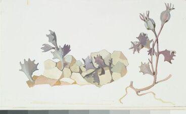 Image: Campanulaceae - Lobelia roughii