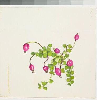Image: Campanulaceae - Pratia angulata