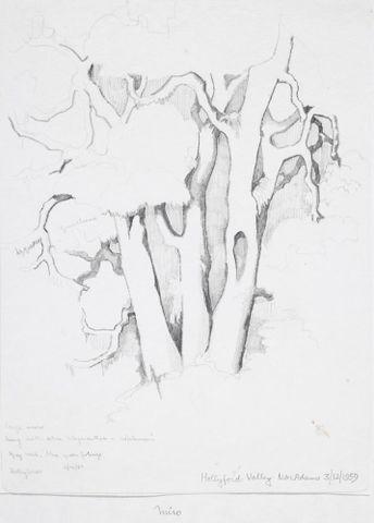 Image: Podocarpaceae - Prumnopitys ferruginea