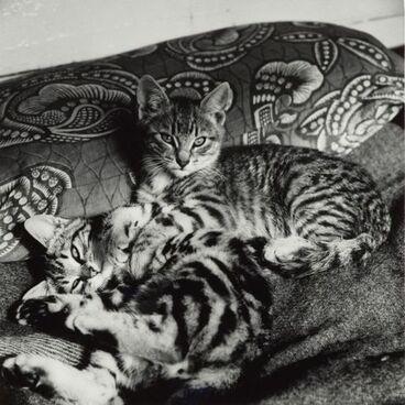 Image: Cats, Waimamaku
