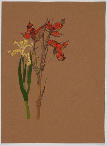 Image: Unidentified specimen