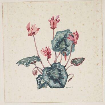 Image: Primulaceae - Cyclamen neapolitanum