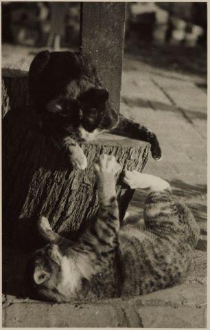 Image: Two cats at play, Waimamaku