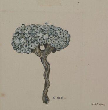 Image: Asteraceae - Raoulia mammillaris