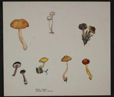 Image: Unidentified species