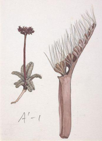 Image: Unnamed specimen