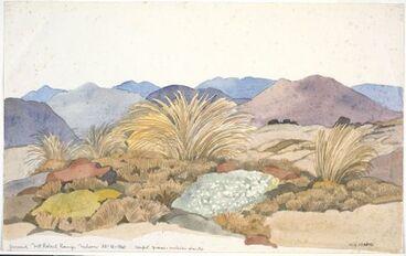 Image: Poaceae - Chionochloa australis