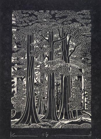 Image: Forest Scene