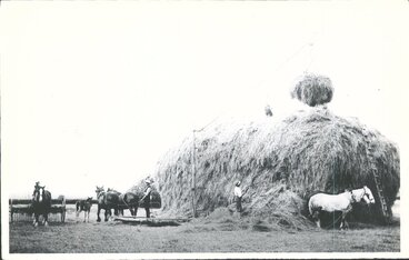 Image: Hay making at Hampden