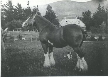 Image: Clydesdale