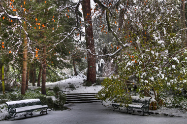 Image: 25th Jul 2011 - Snow - Botanic Gardens #7