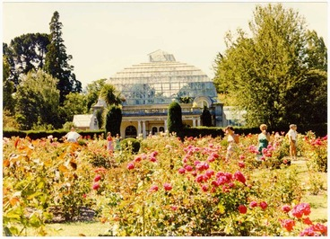 Image: Rose bed in Botanic Gardens