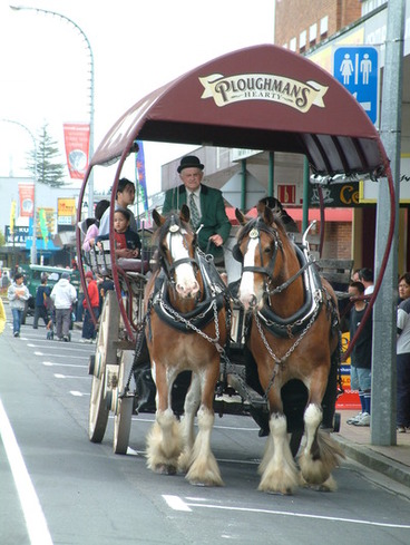 Image: Clydesdales at the Waitomo District Centenary
