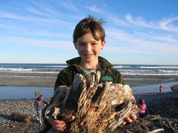 Image: beach driftwood