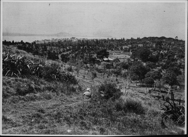 Image: Auckland. View from the Domain.