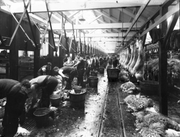 Image: Processing sheep carcasses, Christchurch Meat Company