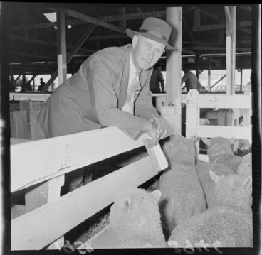 Image: Sheep and owner at Carterton Agricultural and Pastoral Show