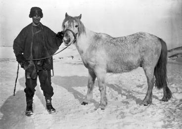 Image: Apsley Cherry-Garrard and pony, Antarctica