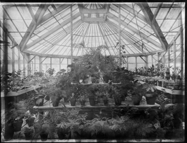 Image: Interior of the greenhouse, Christchurch Botanical Gardens, Hagley Park