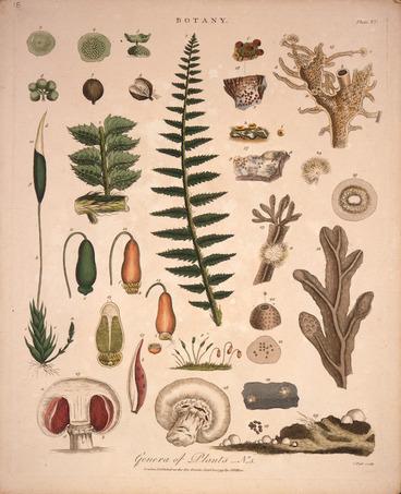 Image: Pass, John, 1783?-1832 [engraver] :Genera of plants. No. 5. Botany. Plate XV. Pass sculp. London, J. Wilkes, Septbr 10th 1799.