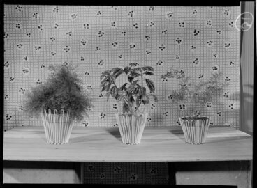 Image: Three potplants on display