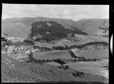 Image: Plantation at Berhampore, Wellington