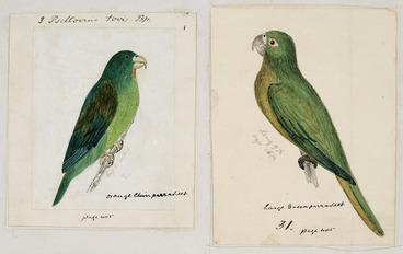 Image: [Tempsky, Gustavus Ferdinand von], 1828-1868 :Psittovius tovi. Bp. Orange chin parrakeet (3). Large green parrakeet (31). [Between 1853 and 1856]